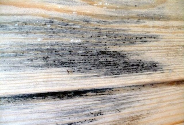 Грибок на древесине - фото
