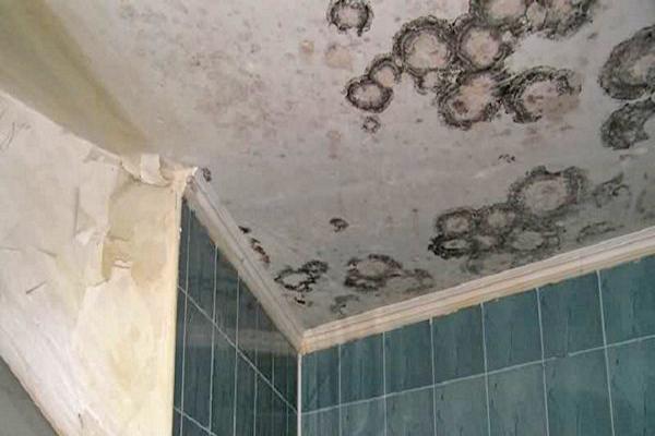 Без вентилятора в ванной очень сыро, может появиться плесень